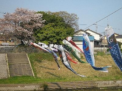 Inuyamakoinobori