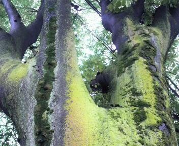 木肌苔フェチ
