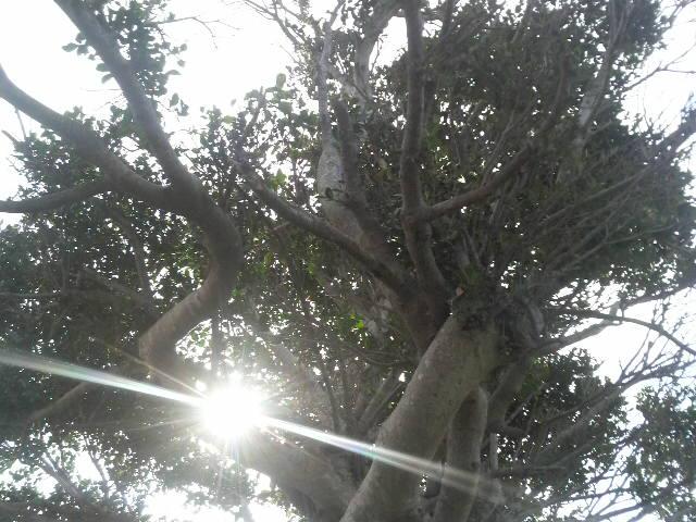 がじゅまるの木の下で
