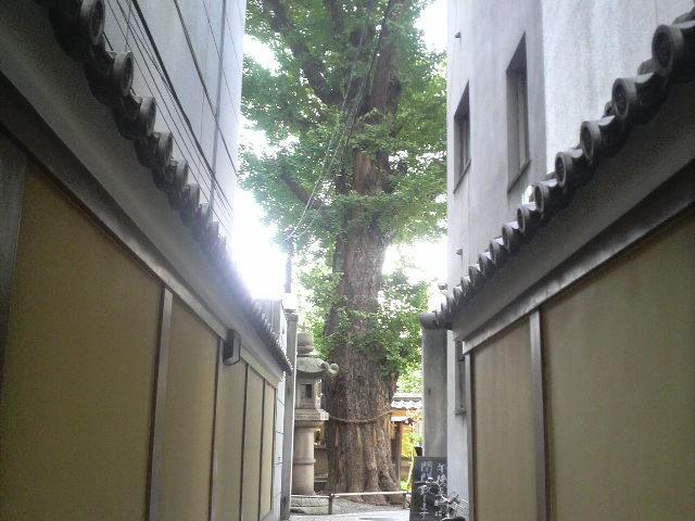 立派な御神木