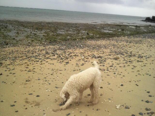 雨の合間のアーラ浜